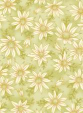 UTAS flannel flower green