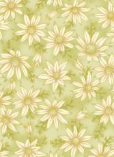 UTAS flannel flower green