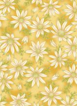 UTAS flannel flower gold