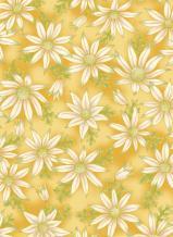 UTAS flannel flower gold