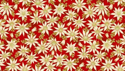 UTAS flannel flower red