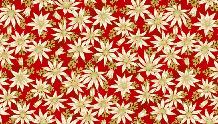 UTAS flannel flower red